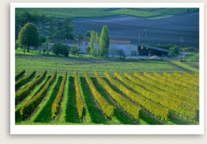 Burgundy Wine Tour by Well Arranged Travel